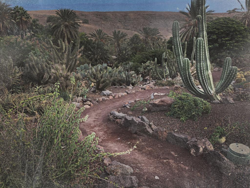 Jardin Botanico De Cactus eller Den botaniska kaktusträdgården